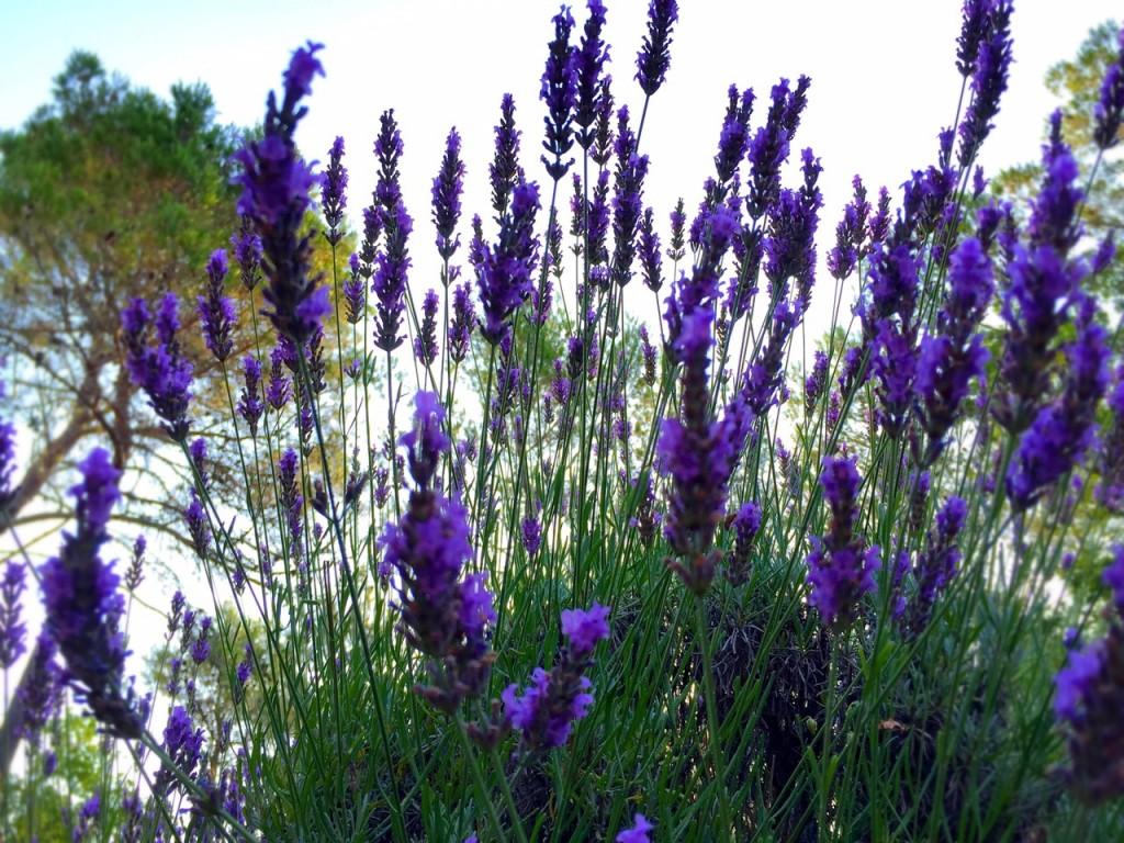 Provence_18