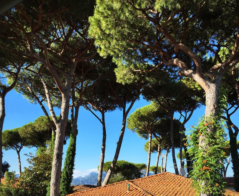 достопримечательности италии, Тоскана, мифы Италии, пинии