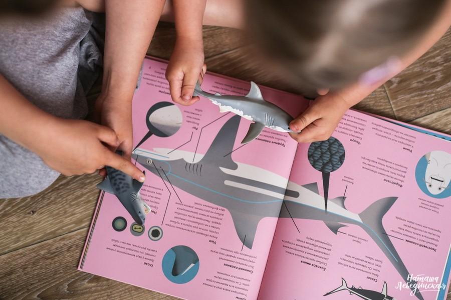 Без ума от акул