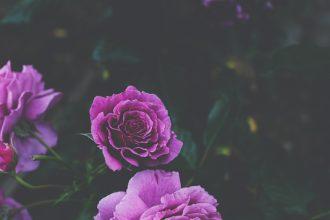 Фиолетовый день 26 марта